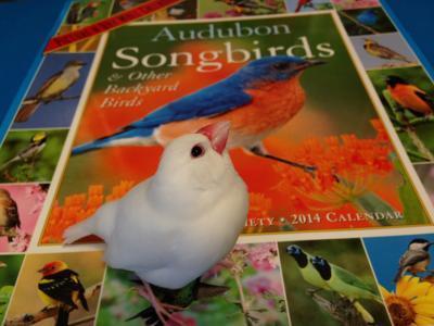 Audubo2014.jpg