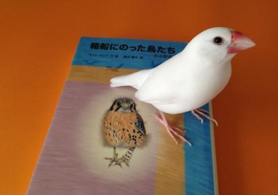 hakobunetori_.jpg