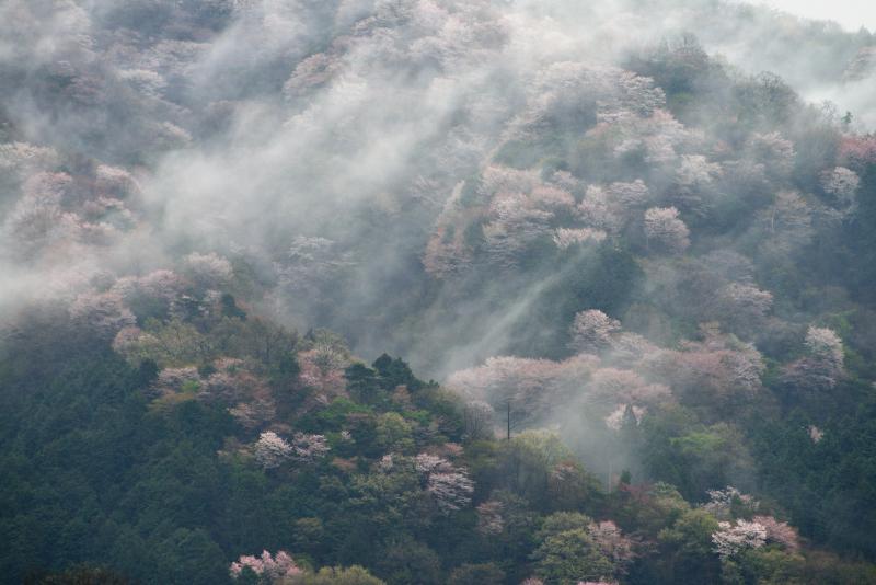 「霧流れる」   (香川県まんのう町)