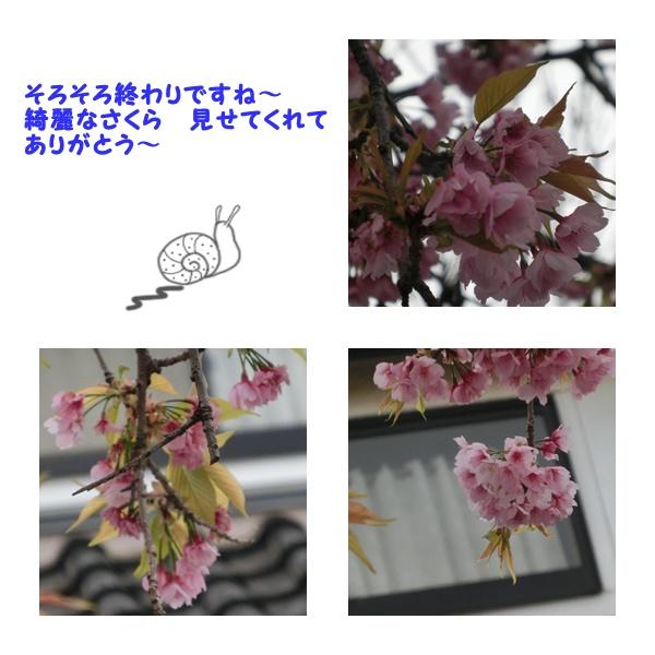 201703311733454ea.jpg