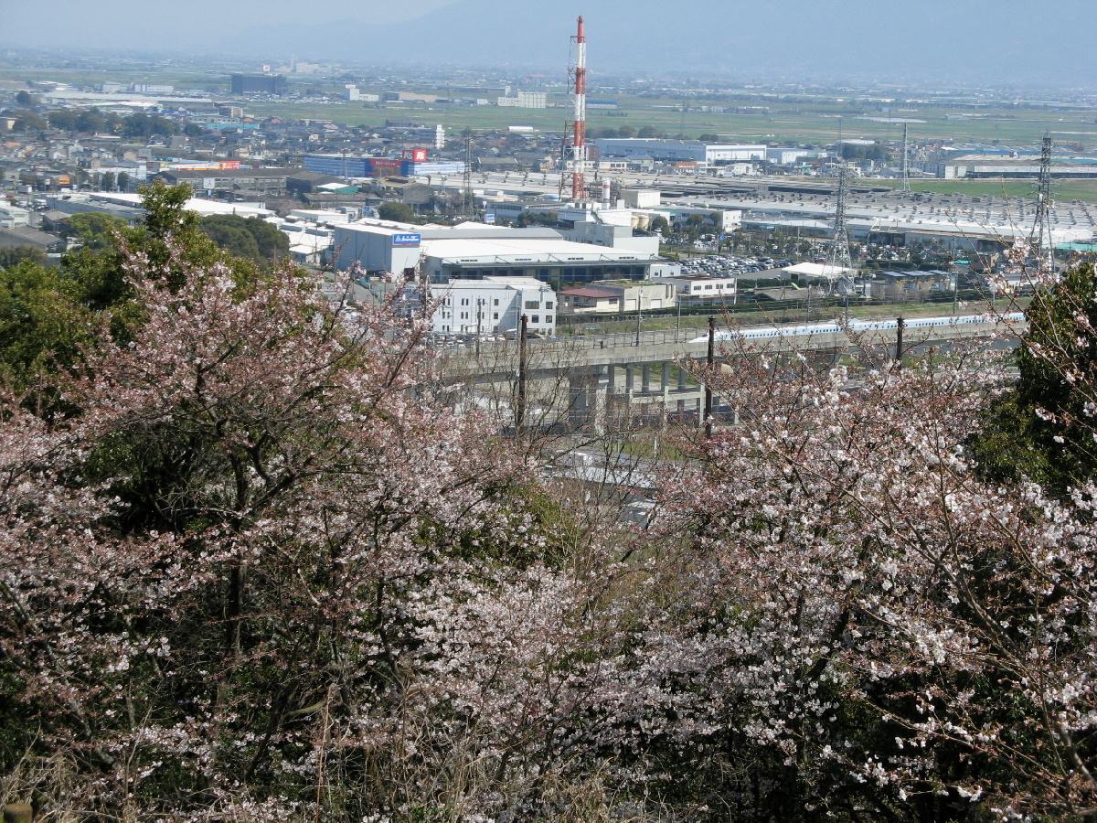 朝日山と新幹線と桜