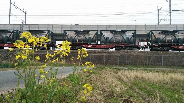 貨物列車と菜の花