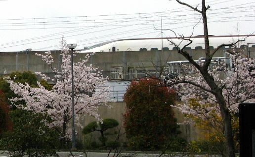 桜と九州新幹線