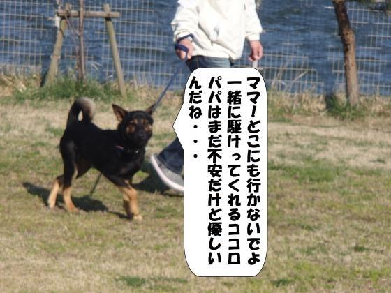 P4010839_convert_20170402083821.jpg