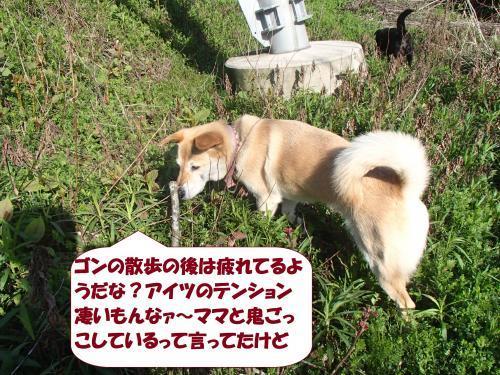 P4121001_convert_20170420113131.jpg