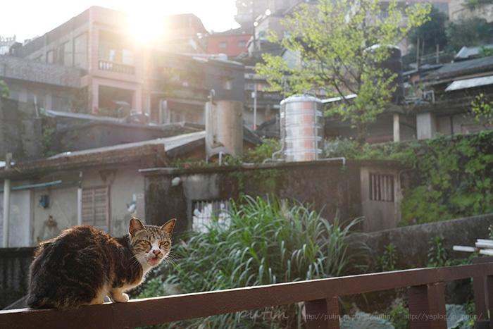 putin_owner_nekoyuhi1732826283ttw.jpg