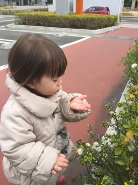 piyoko20170331-4.jpg