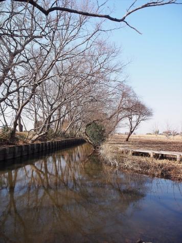浮野の里【埼玉県加須市】