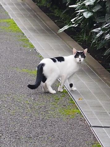 東京都足立区小台
