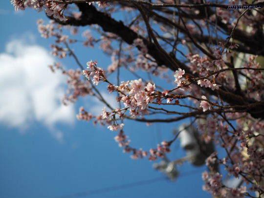 桜と空170402