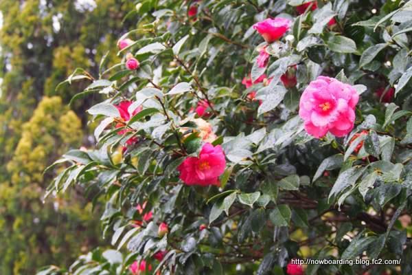 椿花ガーデン