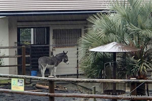 大島公園 動物園 ロバ