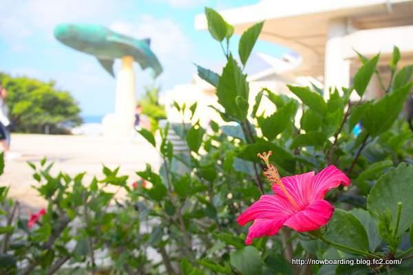 美ら海水族館 沖縄
