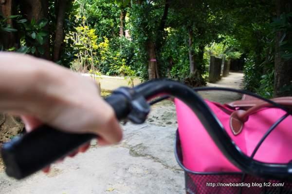 備瀬のフクギ並木 サイクリング