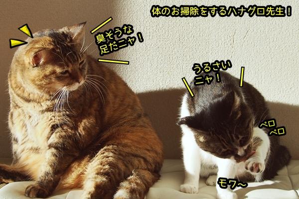 猫 日向ぼっこ