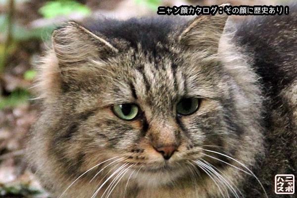 ニャン顔NO69 ロン毛なハイトラ猫さん