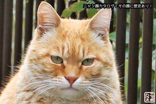 ニャン顔NO71 チャトラ猫さん