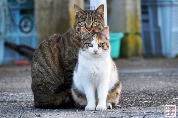 猫 カップル