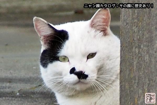 ニャン顔NO73 シロクロ猫さん