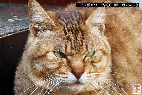 ニャン顔NO64 チャトラ猫さん