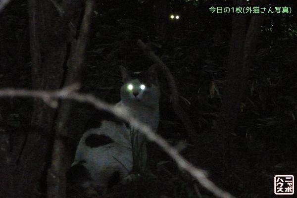 猫 夜 目が光る
