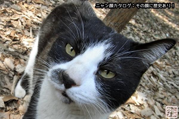 ニャン顔NO74 シロクロ猫さん