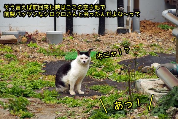 ニャポ旅36 その6 下田猫散策④