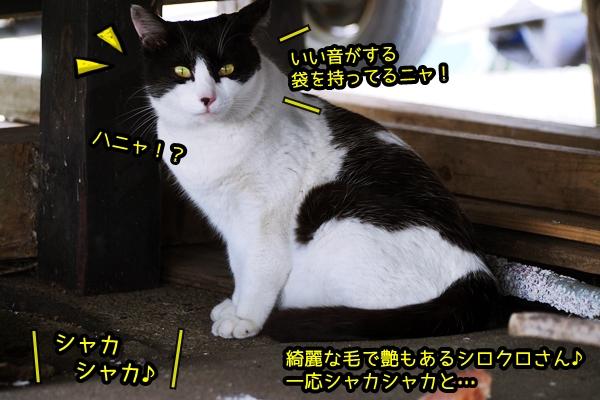 ニャポ旅37 南房総猫さん達との再会旅 中編