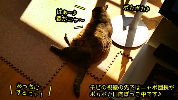 猫 ポカポカ