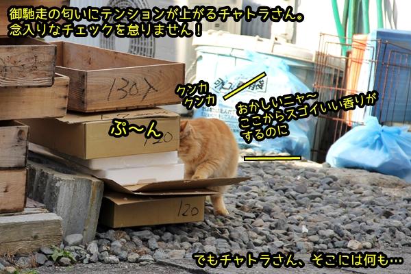 チャトラ猫さんのお仕事♪