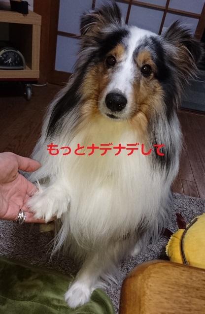 DSC_0827_201702270351523bb.jpg