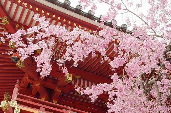 今日は何の日? → 「春分の日」 → それでは、何をする日なのでしょう?