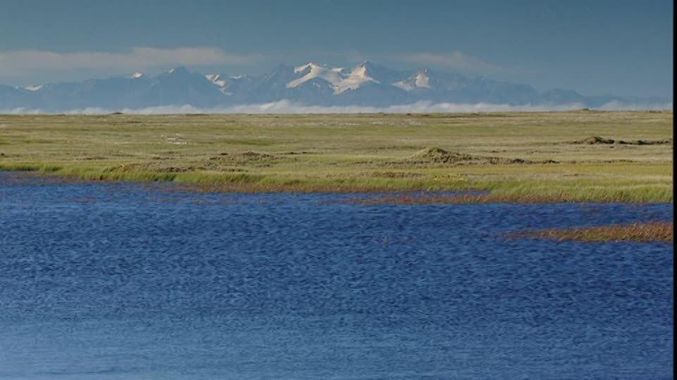159272992-平地-ツンドラ-アラスカ-草原