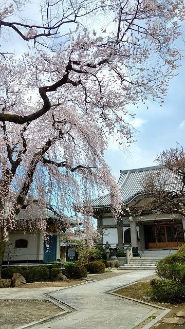 1704shinobu013.jpg