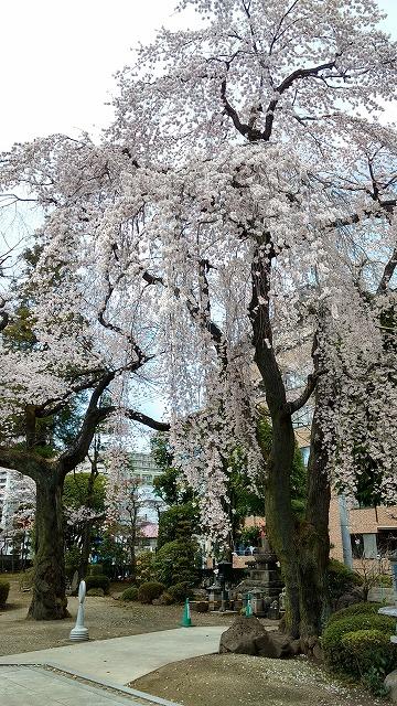 1704shinobu014.jpg