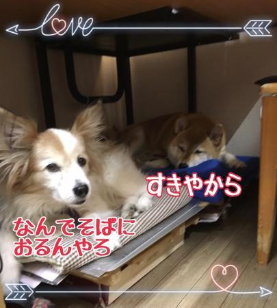 fc2blog_20170212112839fbf.jpg