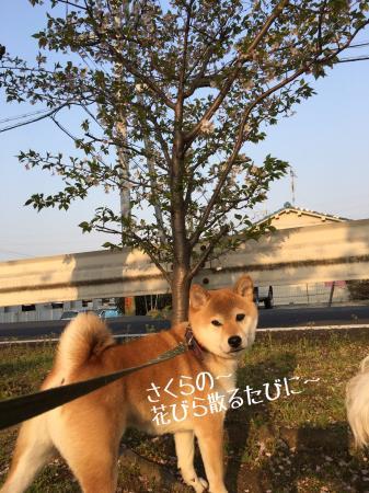 fc2blog_201704151150508cc.jpg