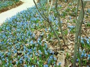 my-garden 136