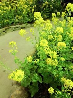my-garden 153