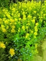 my-garden 142