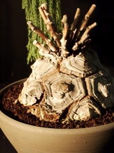 my-garden 233