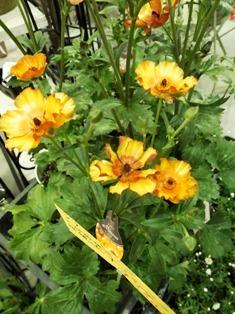 my-garden 107