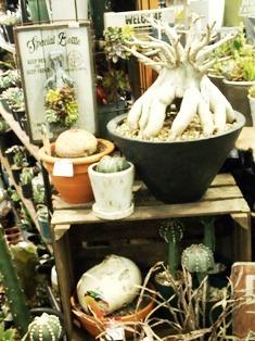 my-garden 128