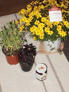 my-garden 298