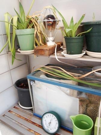 my-garden 071 (2)