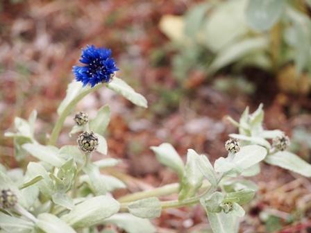 my-garden 032 (2)