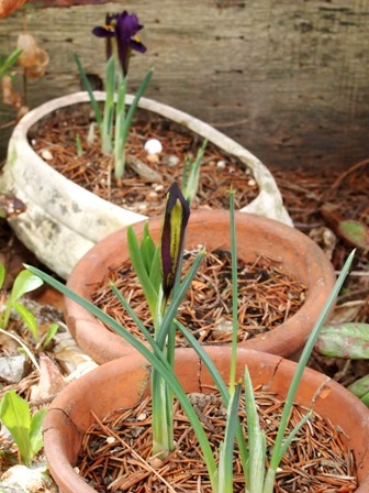 my-garden 088