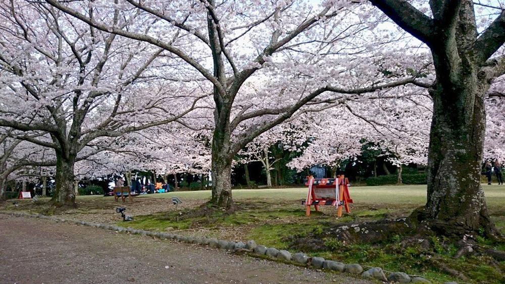 2017_04_12_sakura_02.jpg