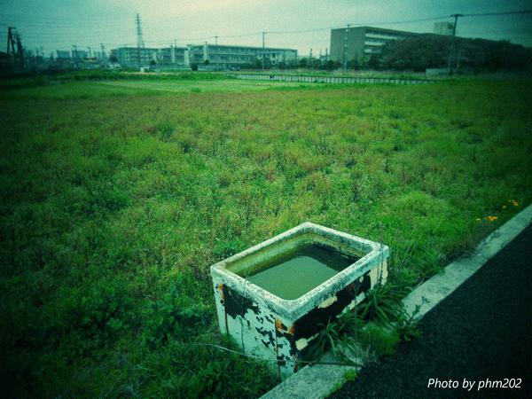 DSCN8097-2jpg_effected.jpg
