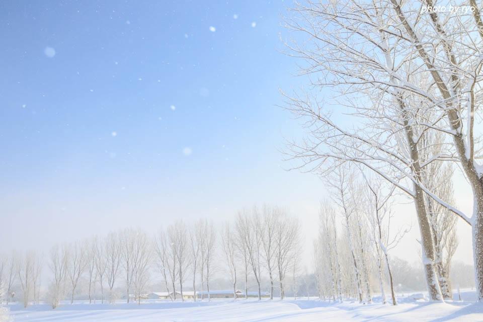 雪舞う朝に